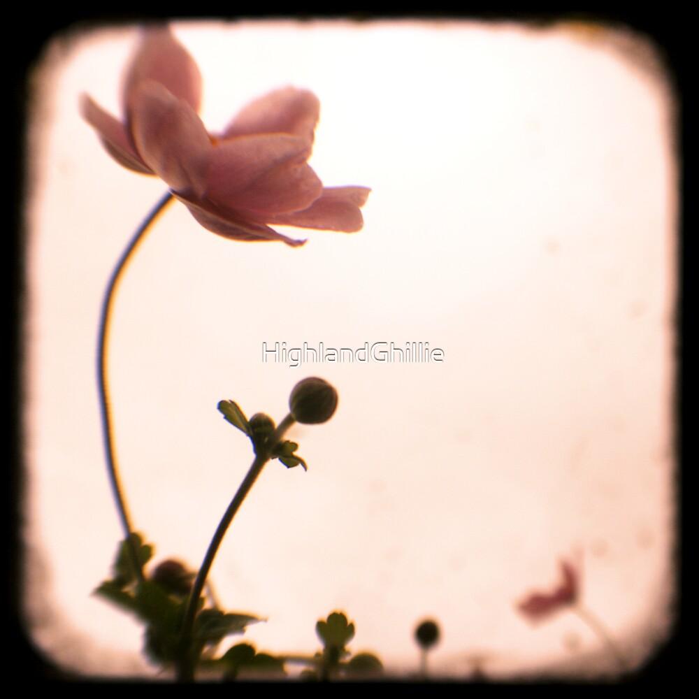 Grandma's Pink Flowers - Japanese Windflowers - Fine Art Viewfinder Photograph by HighlandGhillie
