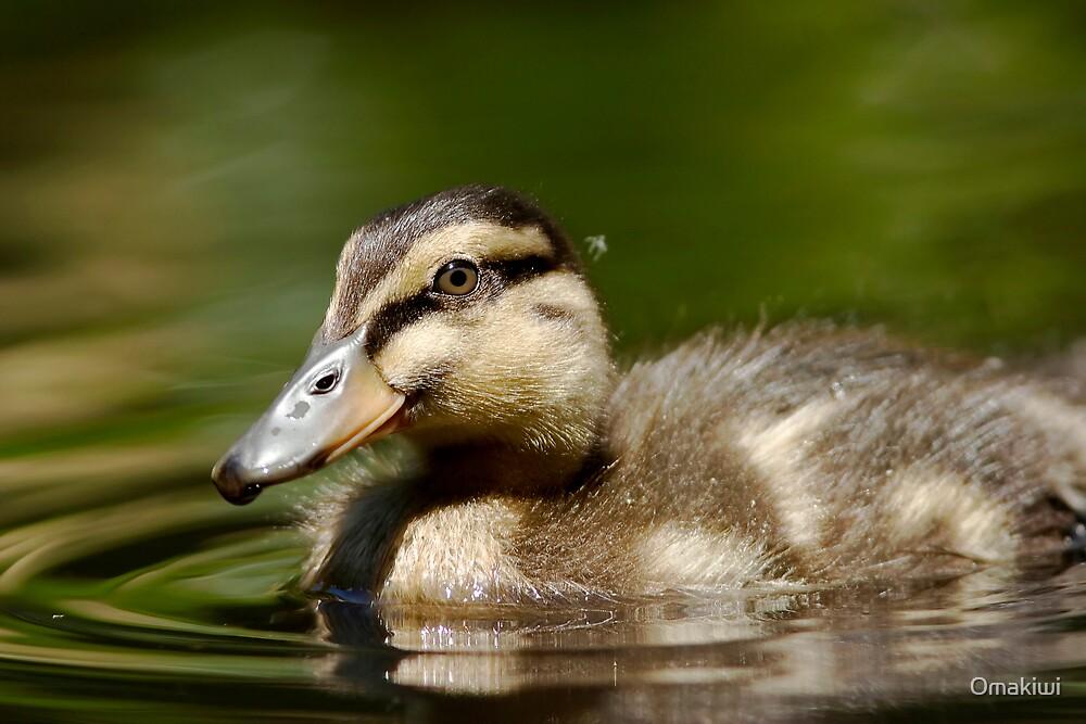 Mallard Duckling by Omakiwi