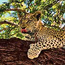 Hungry Leopard Cub by bonniemonahan1