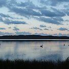 Pelicans at Daybreak by BevB