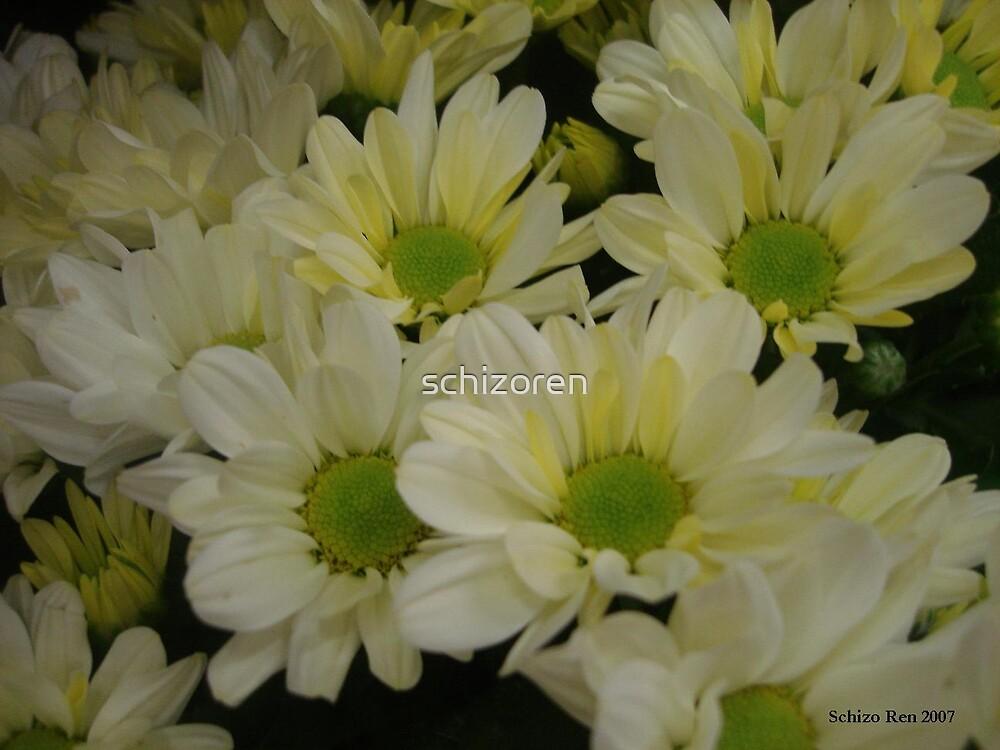 daisy daisy daisy by schizoren