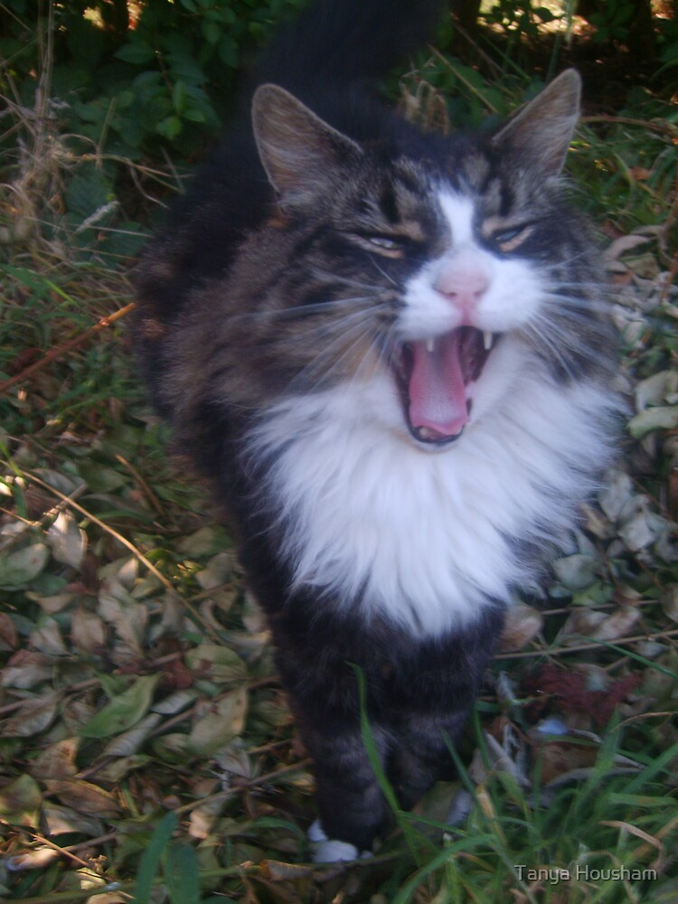 Shouting cat! by Tanya Housham