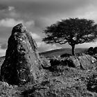Lone tree on Sourton Hill in Dartmoor by peteton