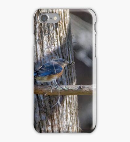 Blue Bird Catches a Spider iPhone Case/Skin