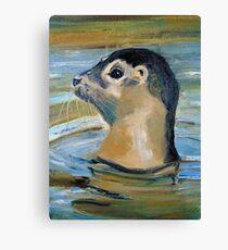 Seal Pup Canvas Print