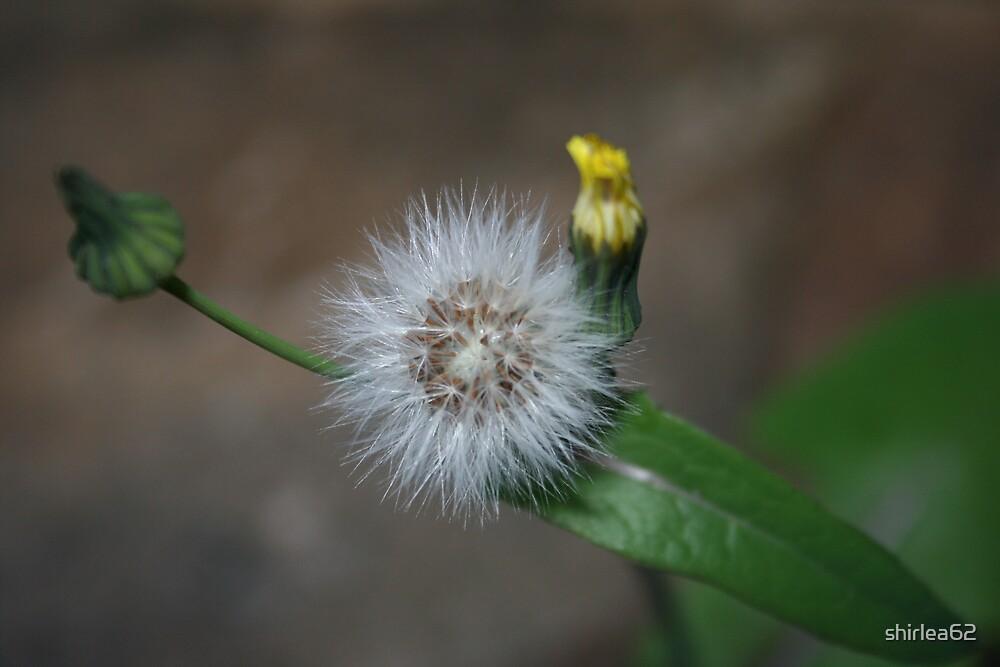 Weeds by shirlea62
