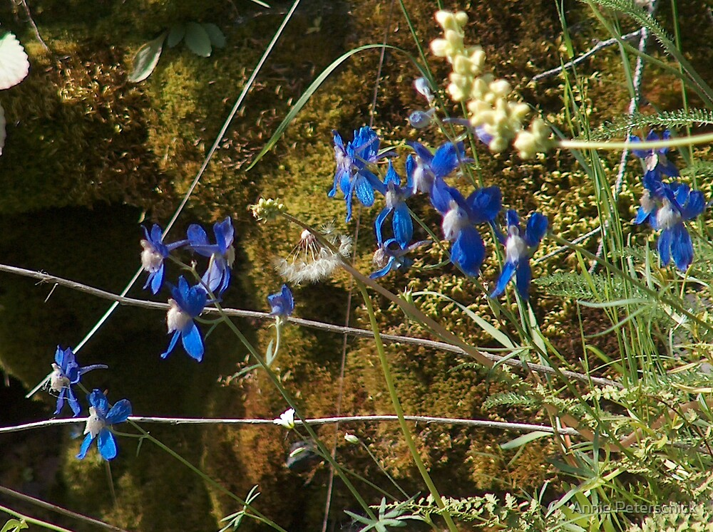 blue flowers 4 by Annie Peterschick