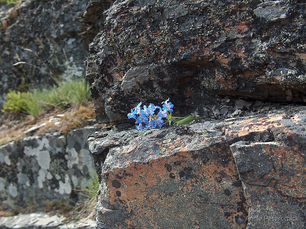 blue flowers 3 by Annie Peterschick