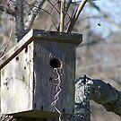 Bird House by byuchic