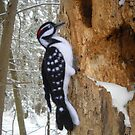 Needle Felted Hairy Woodpecker in Winter by skidgelstudios
