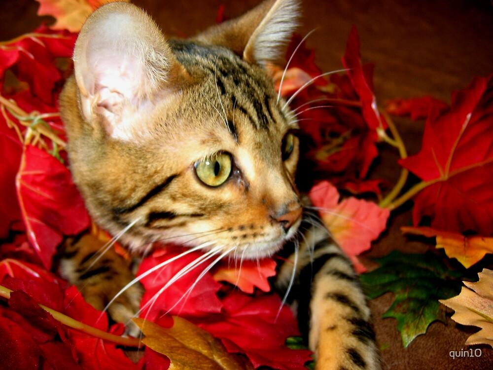 Zen As A Kitten by quin10