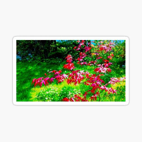Japanese ahorn - red Sticker