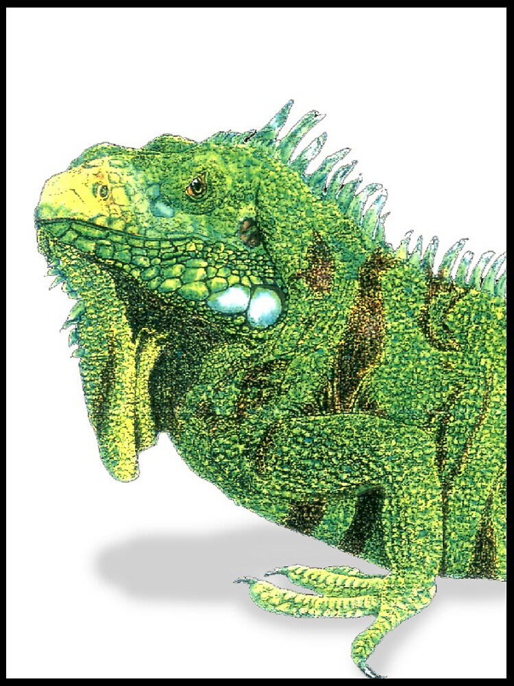 Iguana Profile by kurtmarcelle