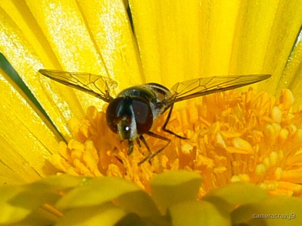 wasp on flower by cameracrazy9
