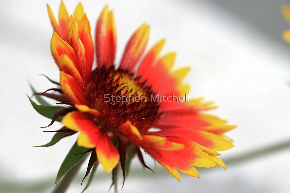 On Fire II by Stephen Mitchell