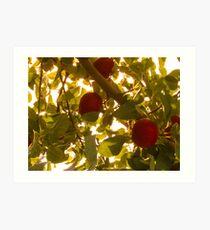 Apples & Leaves Art Print