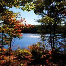 Fall on the Lake by Eileen McVey