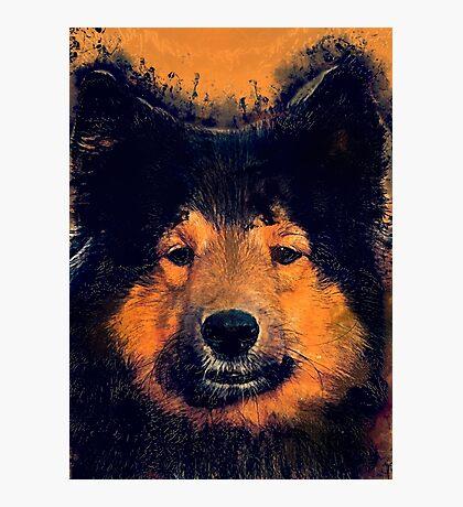 dog barry Photographic Print