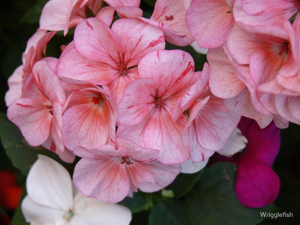 pinky by Wrigglefish