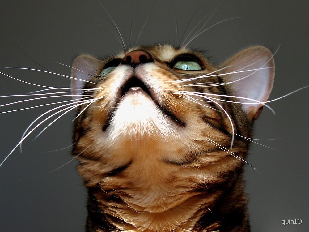 Zen's Whiskers by quin10
