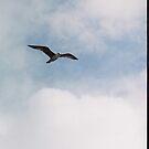 Seagull in flight by hoppityhops