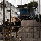 The Urban Way #7 - Pets by Nando MacHado