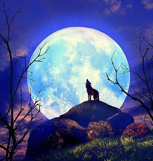 Best Imagen Lobo Aullando A La Luna Image Collection