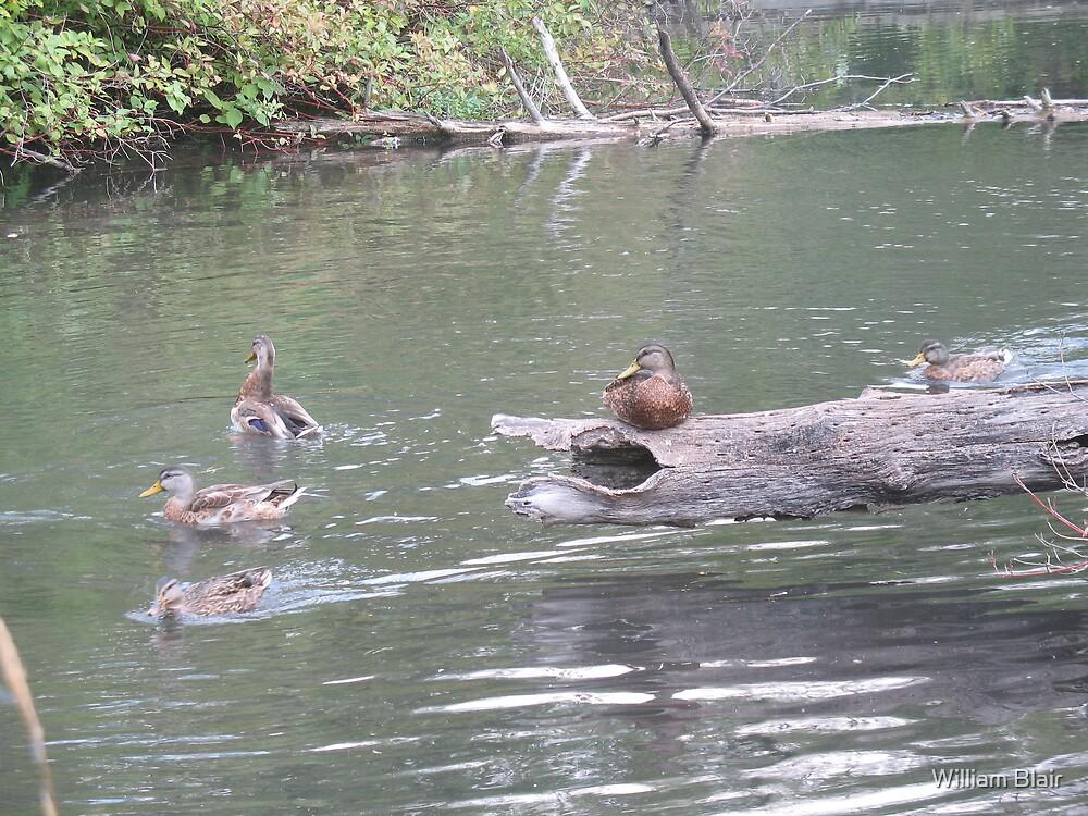 Ducks Unlimited 2 by William Blair
