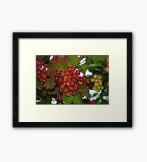 Very Berry Framed Print