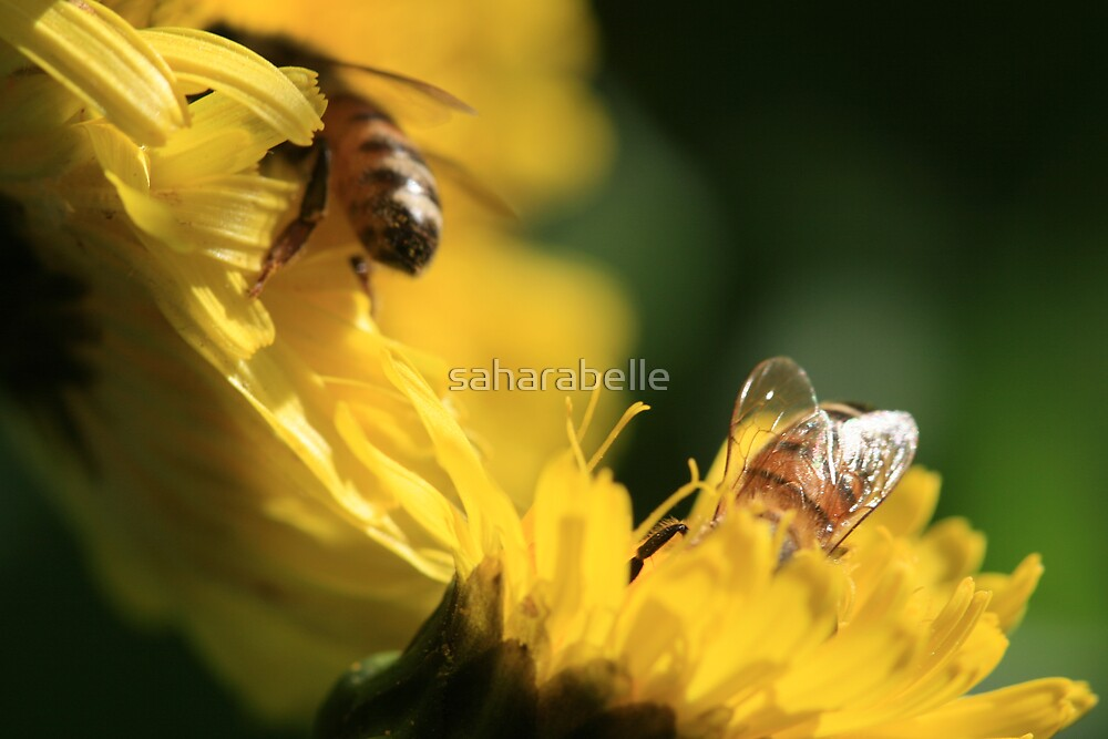 Bee Neighbourly by saharabelle