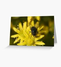 Lord Of The Fly's Greeting Card