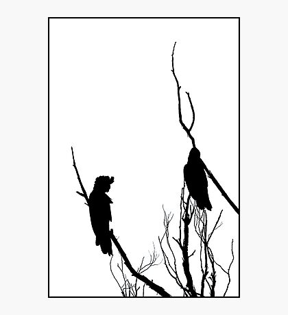 Winter Silhouette - Black Cockatoos Photographic Print