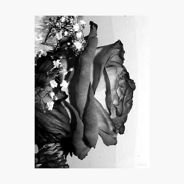 Rose black and white Photographic Print