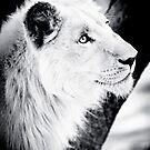 Male Lion I  by Beth Wold
