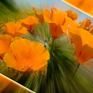 Poppies in Motion by blwdigital