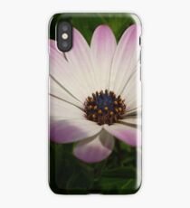 Side View of A Pink and White Osteospermum iPhone Case