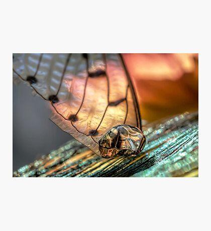 Gold on the Diamond Photographic Print