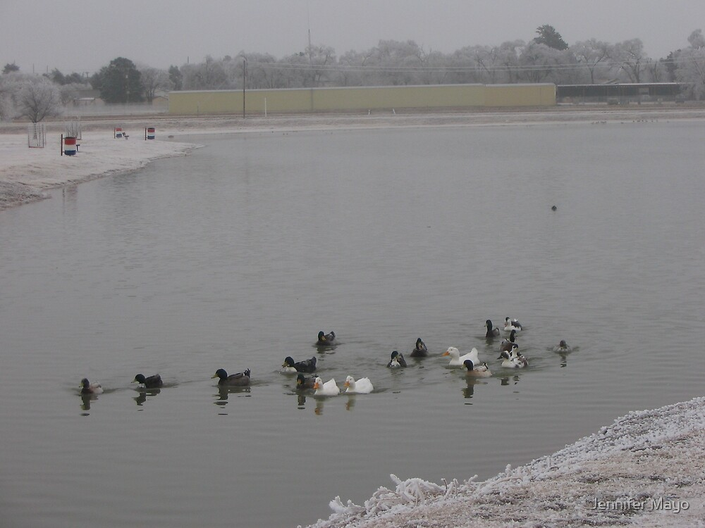 Cold Ducks by Jennifer Mayo
