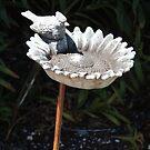 Bird bath by Wendy Dyer