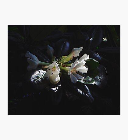 Serenus Photographic Print