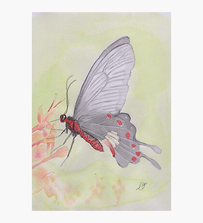 Butterfly or Deadpoolfly? Photographic Print