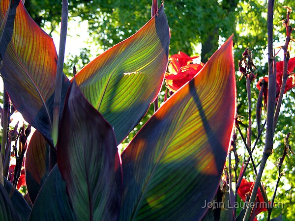 """""""September's Glow"""" by John Lautermilch"""