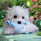 Hermes the Maltese - An Introduction by Morag Bates
