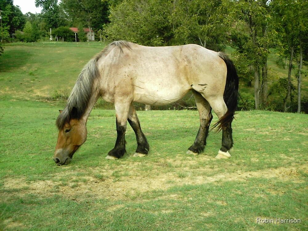 Horse 2 by Robin Harrison