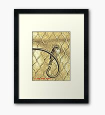 Yellow-bellied Flycatcher Framed Print