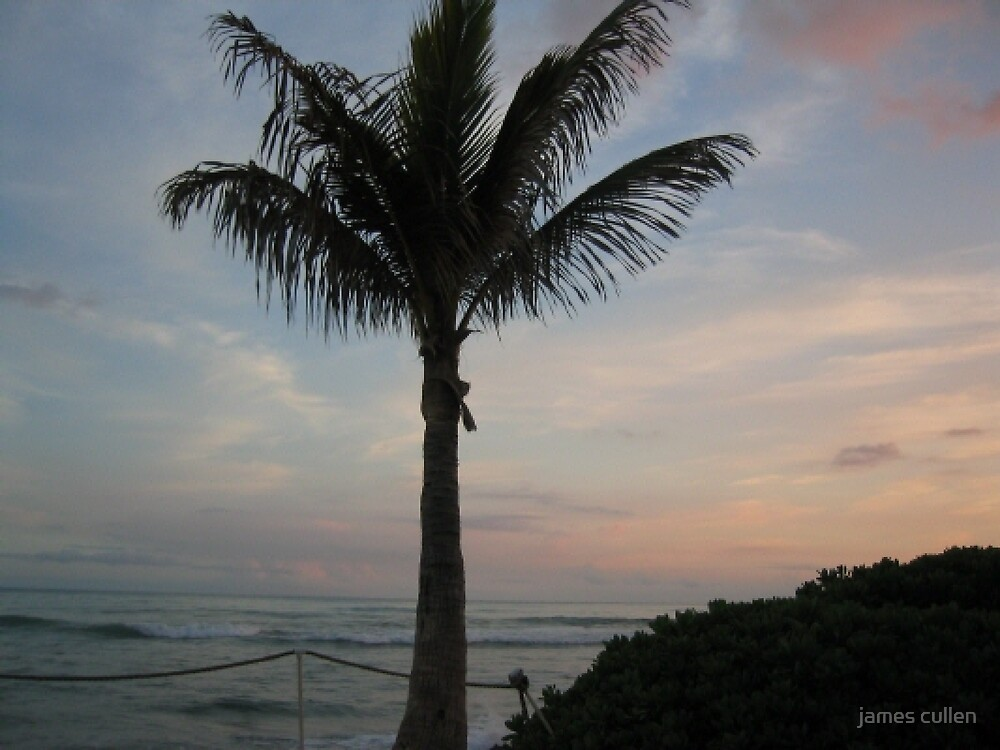PALM TREE by james cullen