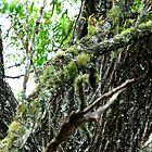 Lichen on Ironbark by Mark Batten-O'Donohoe