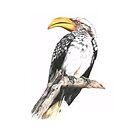 Yellow-Billed Hornbill, Zimbabwe, Africa by skidgelstudios