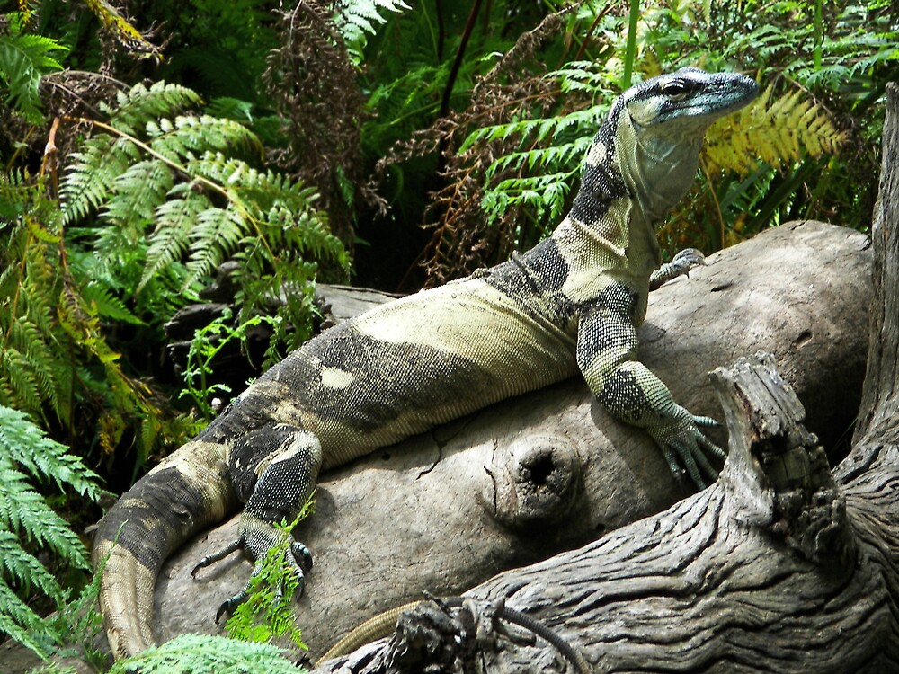 Lizard by Linda Swadling