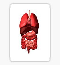Conceptual image of internal organs of the respiratory and digestive systems. Sticker